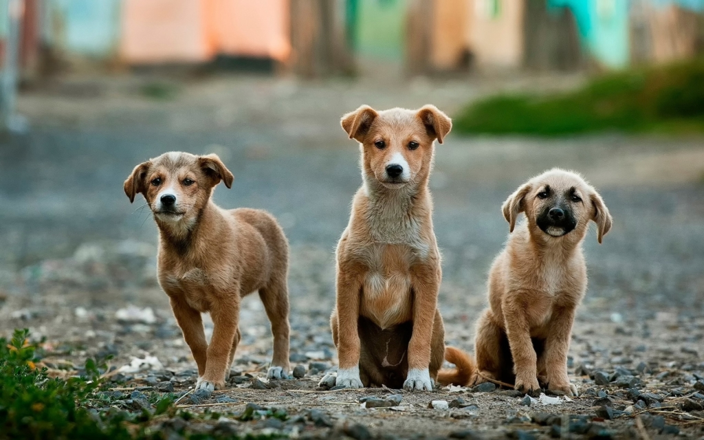 How to adopt a stray dog: An easy, step-by-step guide