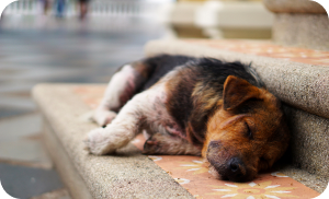 how to adopt a stray dog - malnourished puppy