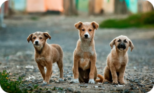 how to adopt a stray dog - street dogs