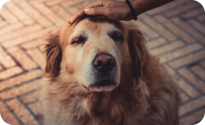Canine therapist - Dog separation anxiety solutions