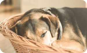 Cozy corner - Dog separation anxiety solutions