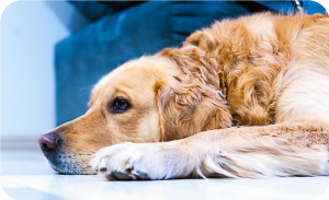 Depression in dogs - Seeming withdrawn