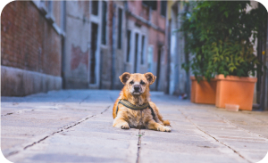 How to help a stray dog - Community dog