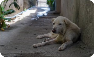 How to help a stray dog - Give vaccination