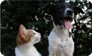Foster care for dogs - Dog living with cat
