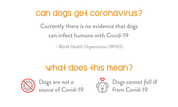 Can dogs get coronavirus covid-19? The answer is no
