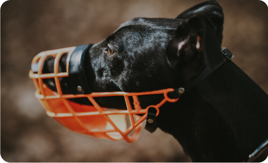 Pet laws for apartments in India - Dog wearing muzzle