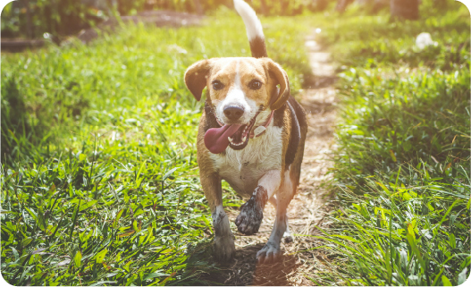 how to stop dog barking at night - give lots of exercise