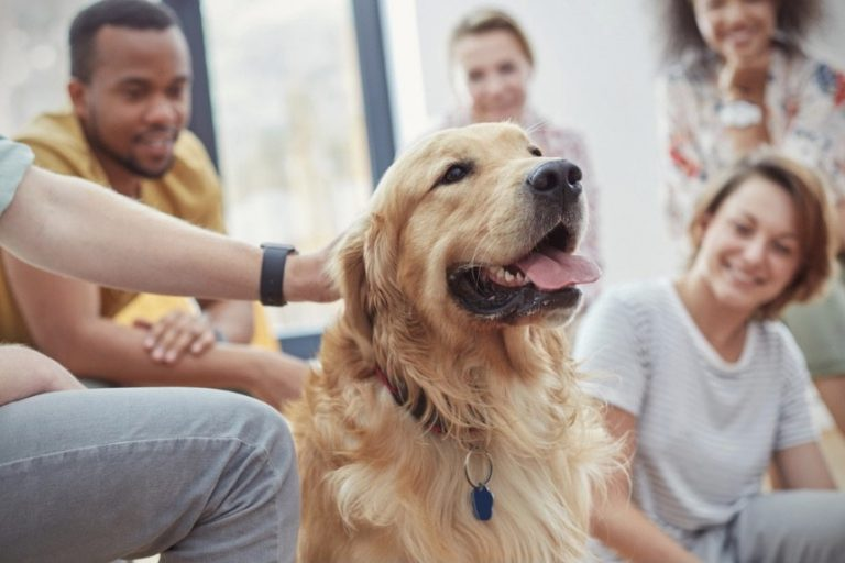 The-healing-world-of-therapy-dogs-and-the-benefit-of-therapy-dogs-golden-retriever-interacting-with-a-bunch-of-people